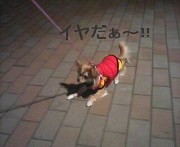 2007-03-15_01-47.jpg