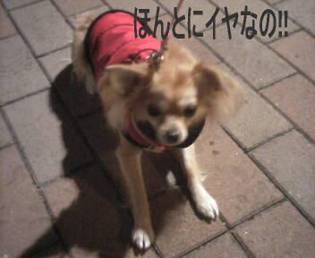 2007-03-15_01-52.jpg